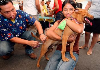 rabies-control-pet-vaccination-epa-20150220.jpg