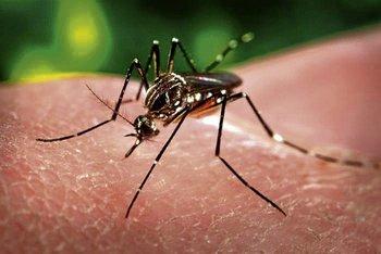 Dengue_manila.jpg